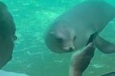 游客玩手机 海狮好奇凑近一起看