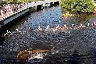 美志愿者组成人墙救助被困运河4天的海豚