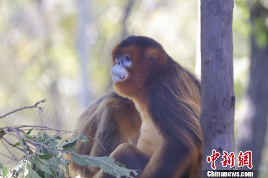 """哈尔滨北方森林动物园:动物体验北方民俗""""抢秋膘"""""""