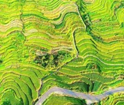 中国林贡献中国绿