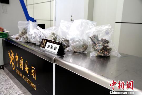 银川海关截获大批活体石珊瑚等濒危物种制品
