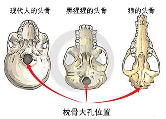 埃塞俄比亚挖出一块头骨,人类祖先换人了?