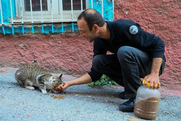 太有爱了!土耳其男子坚持喂食流浪猫狗13年风雨无阻