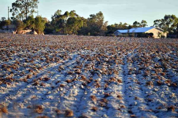 澳大利亚城市干旱严重 土地龟裂如龟壳