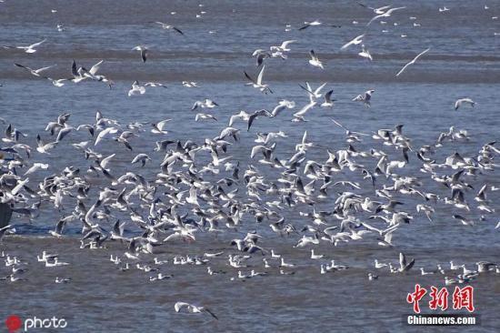 国家林草局:加强秋冬季候鸟保护 彻底铲除安全隐患