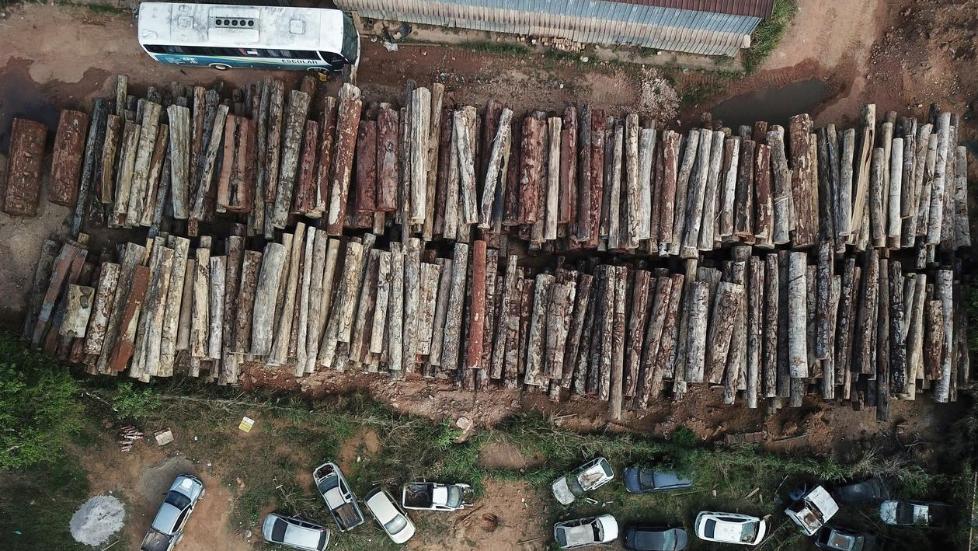 巴西亚马孙雨林遭砍伐面积激增