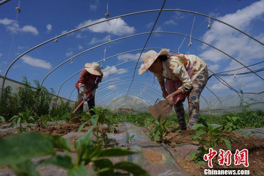 四部门:到2022年3大主粮作物农业险覆盖率达70%以上