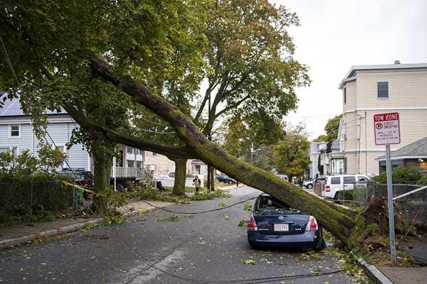 美国马萨诸塞州多地遭暴风雨袭击 大树被连根拔起