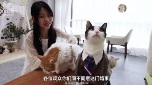 """""""重度吸猫患者""""走红西瓜视频,五只喵星人成""""主演"""""""