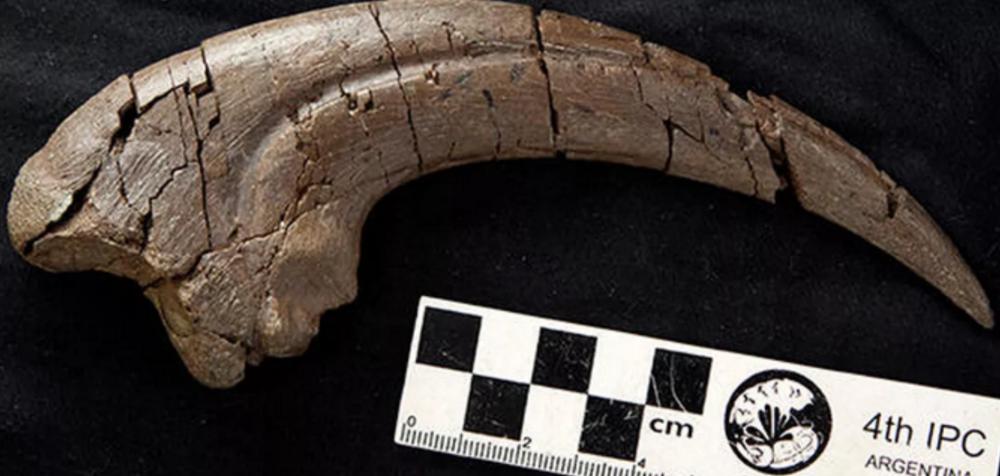 外媒:科学家从1亿年前的化石中发现恐龙新物种