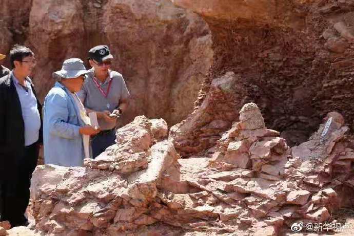 重大发现!甘肃永靖再次发现巨型恐龙骨骼化石