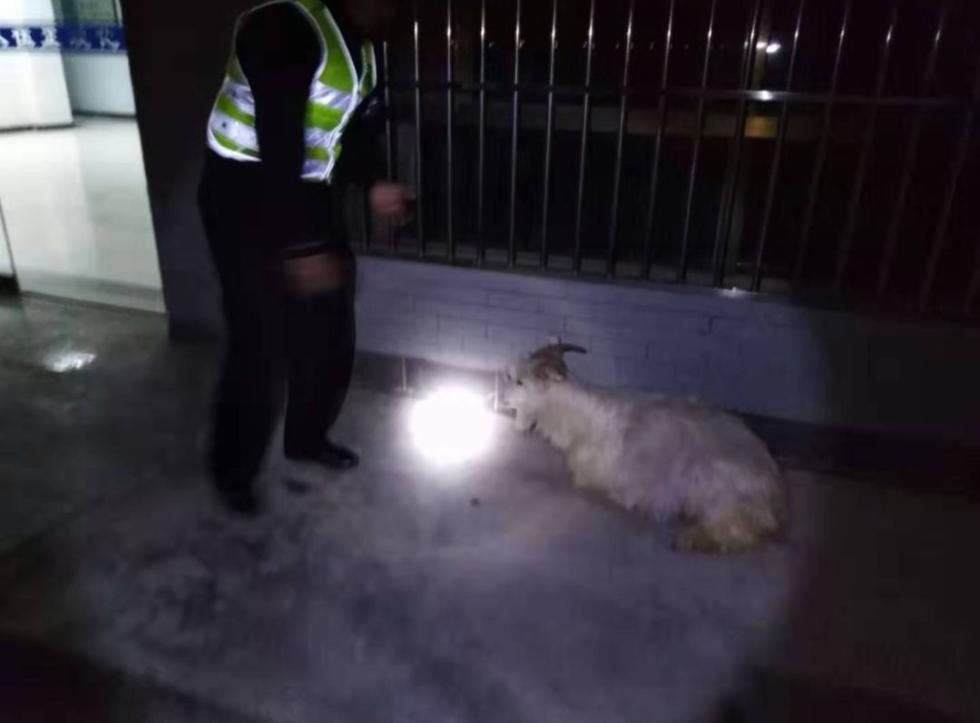 宁夏农户的羊上跑上高速,小轿车遭殃了!