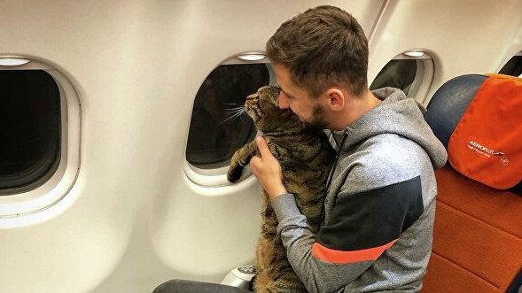 俄男子携宠物猫登机被拒 原因竟是这个
