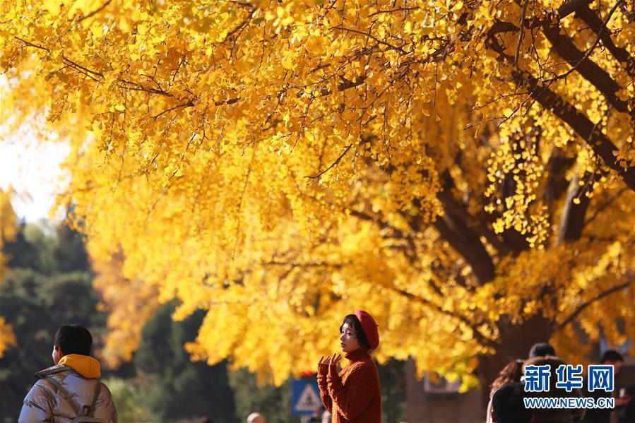 赏秋清华园