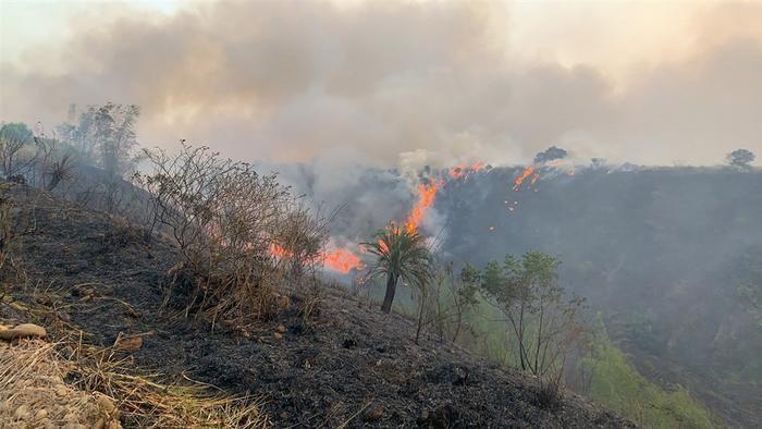 台湾发生杂草火警燃烧面积约2公顷 现已扑灭(图)