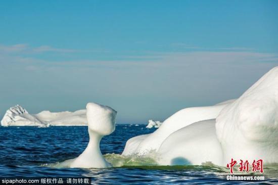 致命病毒侵袭海洋哺乳动物 原因或是冰川融化?