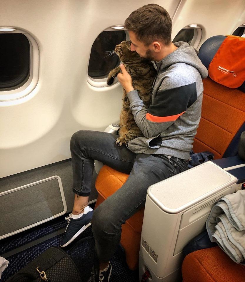 痩猫换胖猫,俄航乘客偷带超重宠物上机被清空常旅客里程数