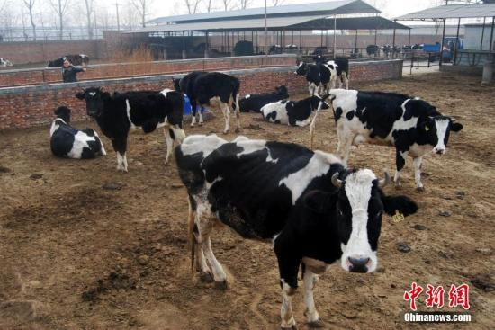 国产奶是不是能百分之百放心喝?农业农村部回应