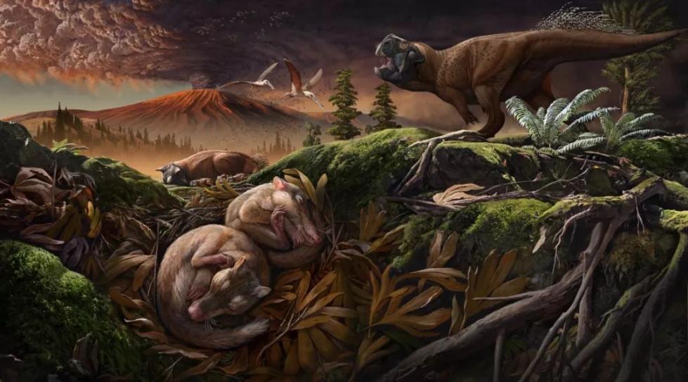 """1.24亿年前,哺乳动物的听觉和咀嚼功能就""""分手""""了"""