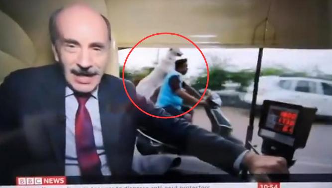 """BBC印度录节目,被小狗""""骑""""摩托抢了镜……"""