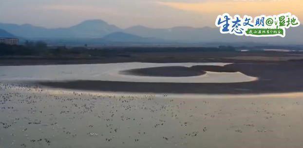 6万多只候鸟飞抵网湖湿地 首次发现白头鹤