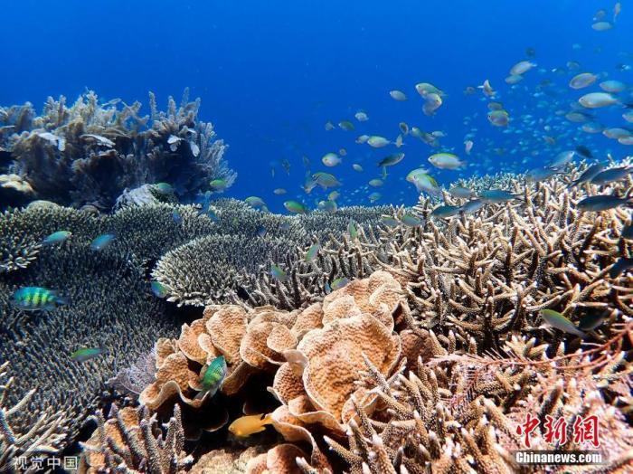 全球首例 太平洋岛国帕劳禁用有害珊瑚礁的防晒霜