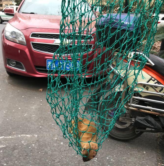 杭州一小区发现野生动物!最后居民这样操作