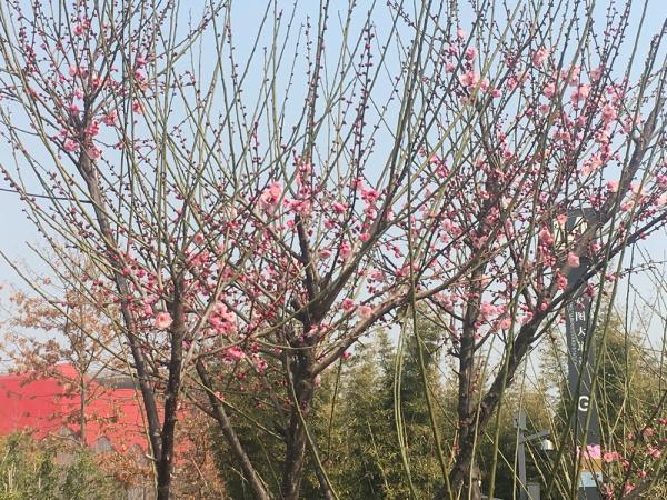 医护日记|粉红的花、嫩绿的草,原来春在枝头已十分
