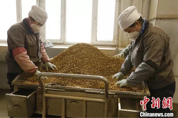 新疆兵团企业陆续复工复产 优先保障防疫物资等需求