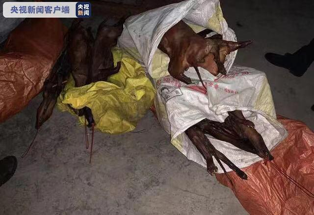 四川巴中捣毁一非法野生动物制品交易窝点 查获相关制品266.8公斤