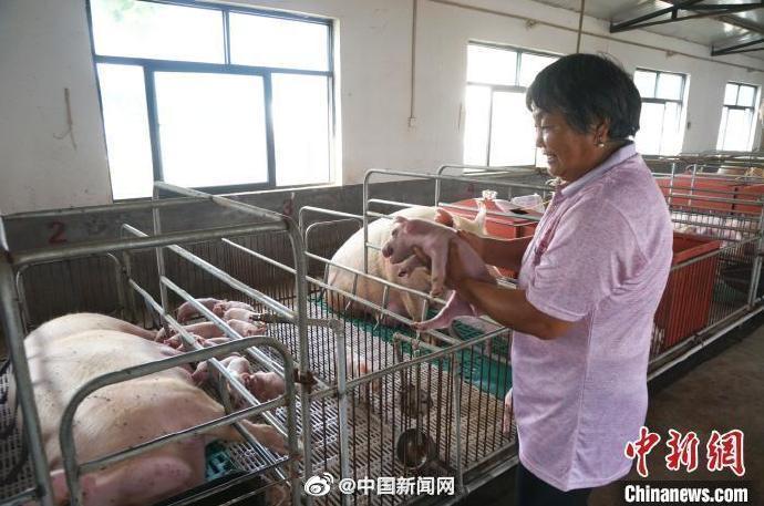 农业农村部:确保年底生猪生产接近常年水平