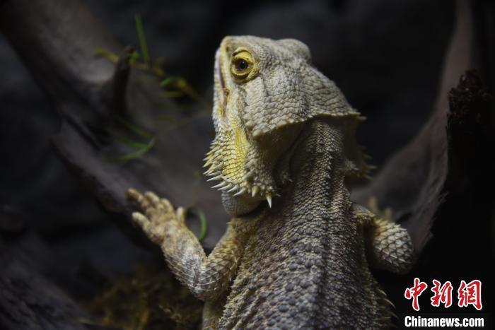 深圳野生动物禁食条例征求意见 人工繁育野生动物也将被禁食