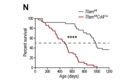 線粒體功能障礙的T細胞介導的免疫失調可誘發老年相關疾病和早衰
