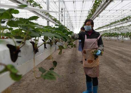 让大数据成为智慧农业发展的引擎